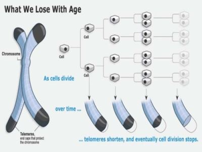 chart of what we lose with age
